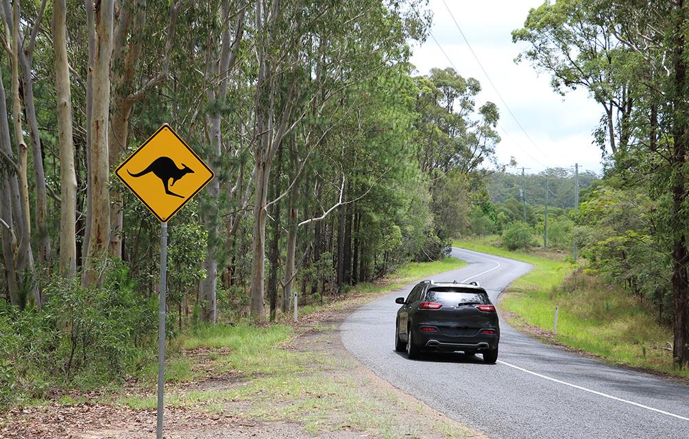 Car driving along road with kangaroo sign